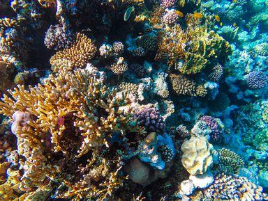 Красное море: прогулка накатере спанорамным дном