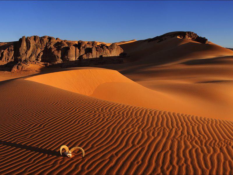 Двухдневное путешествие вмагическую Сахару