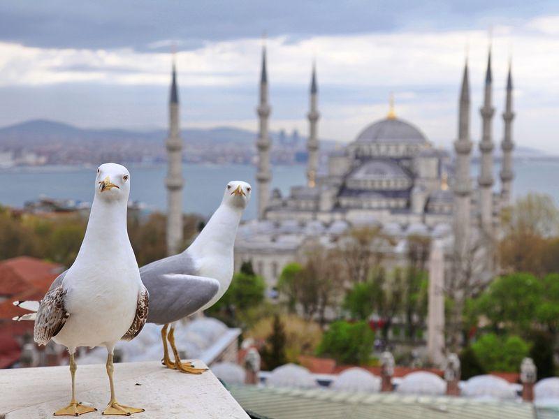 Экскурсия Стамбул: all inclusive