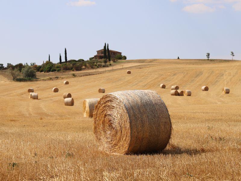 Экскурсия Гастрономическое путешествие по винодельням Тосканы
