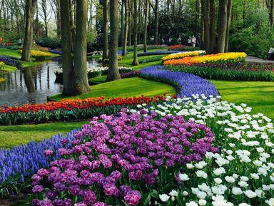 Прогулка поАмстердаму ипарк Кёкенхоф— заодин день