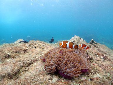 Мир кораллов Паттайи
