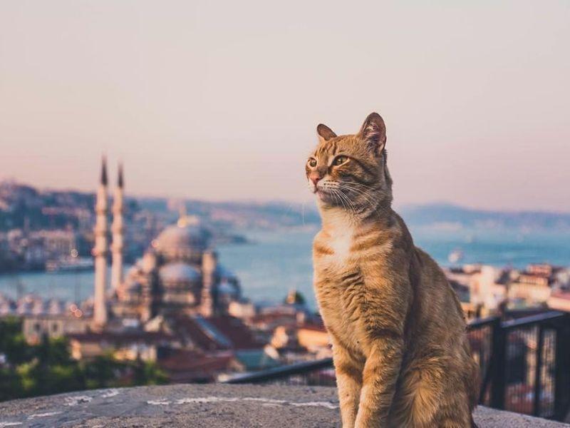 Экскурсия Секреты Стамбула