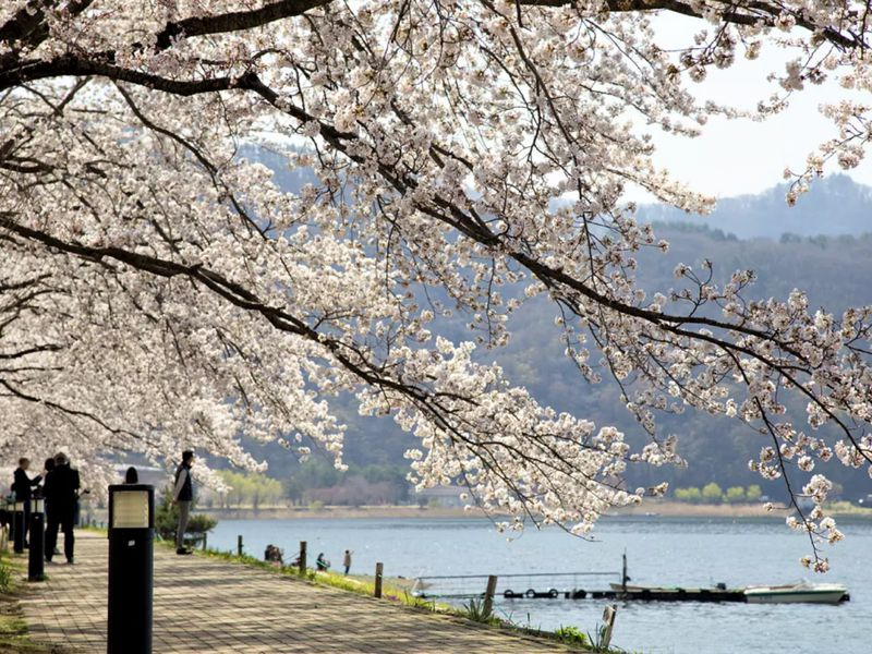 Путешествие к подножию Фудзиямы