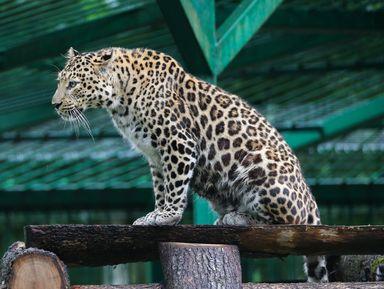 В мире животных Кавказа