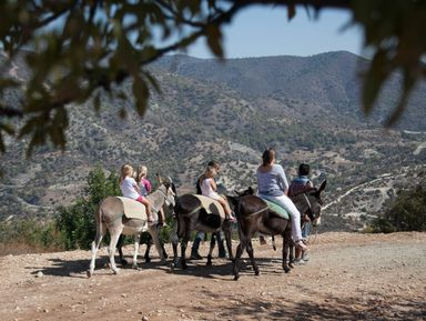 Укрощение строптивых осликов в Лимассоле