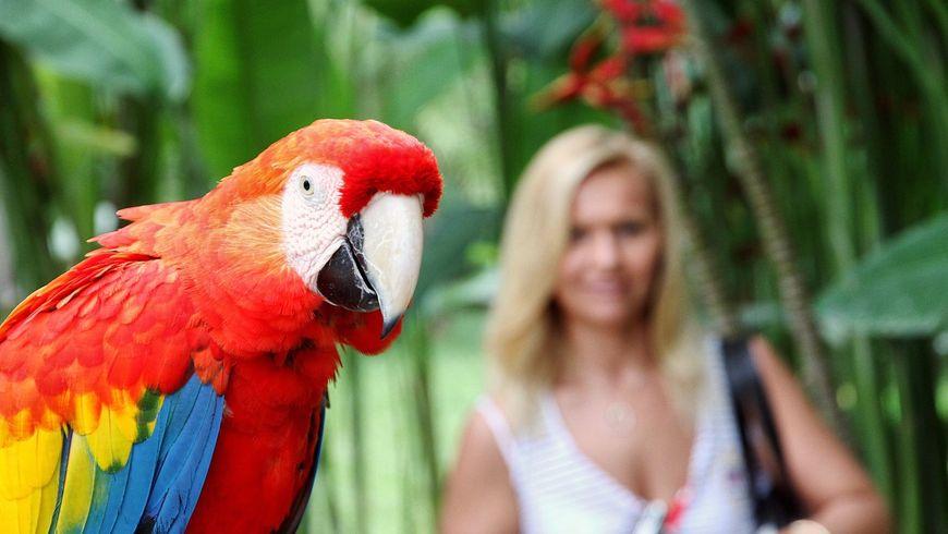 Вмире животных на Бали