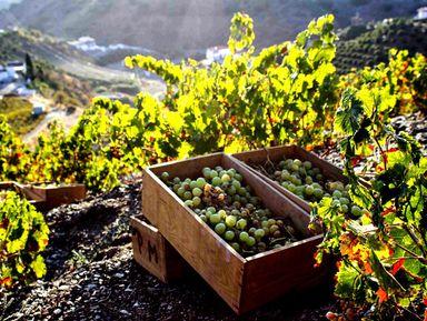 ИзБарселоны— вмир игристого вина ишоколада
