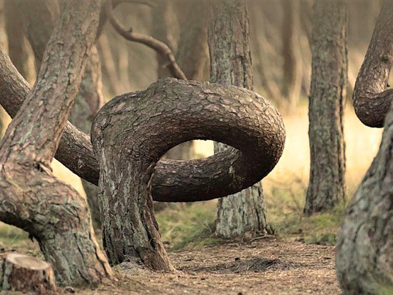 Природа и легенды Куршской косы