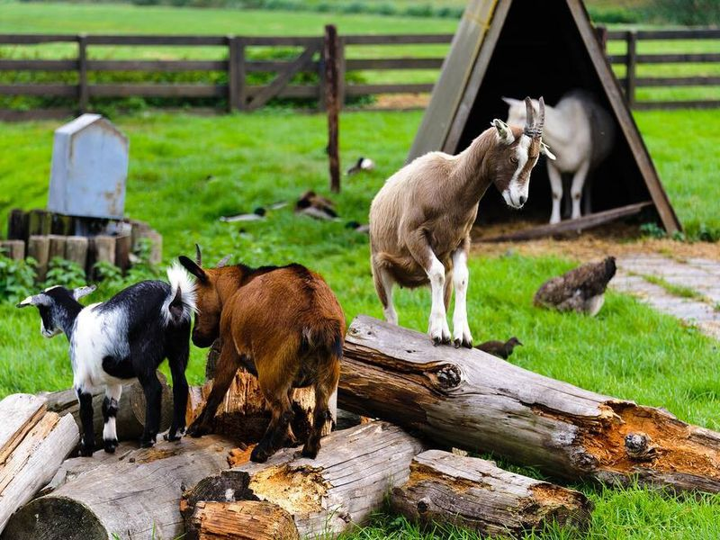 Мельницы, сыр и ремесла: путешествие в Заансе-Сханс в мини-группе