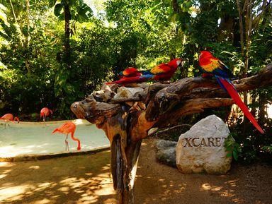 Эко-парк Шкарет: слияние дикой природы имайянской культуры
