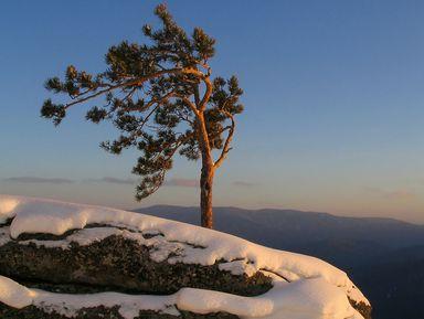 Трекинг к горе Круглая, или плюшевые пейзажи Алтая