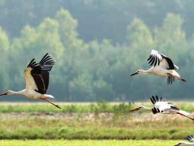 Красота Брестской земли: Беловежская пуща и не только за 2 дня