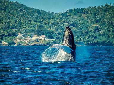Райская Самана игорбатые киты