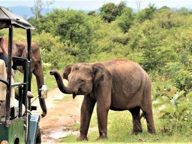 Мозаика Шри-Ланки: сафари, форт Галле и драгоценные камни