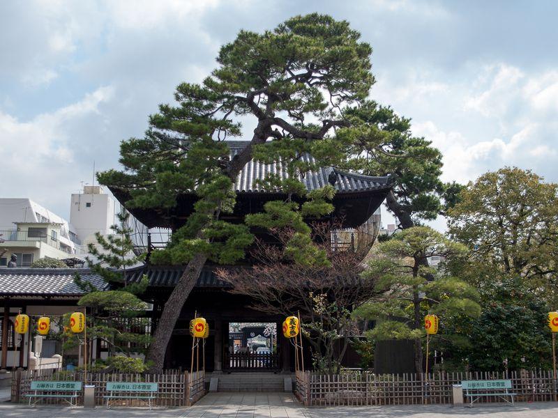 Очарование южного Токио