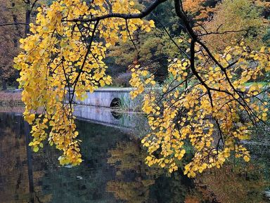 Экологическая экскурсия по парку «Сергиевка» в Петергофе