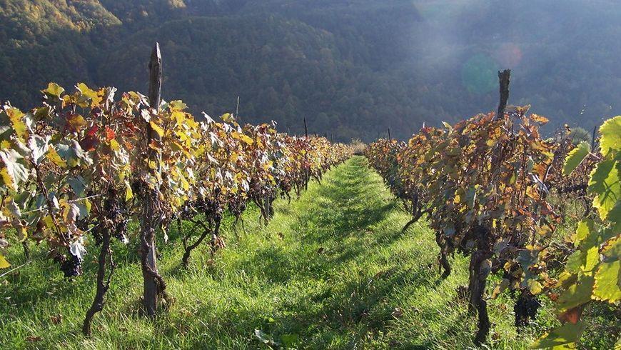 Дорогу в Кахетию осилит... ценящий вино!