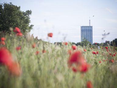 Белград— город награнице двух культур