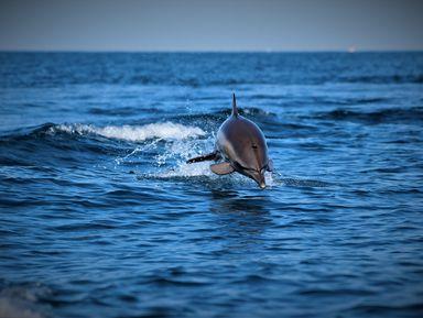Экспедиция кчерноморским дельфинам